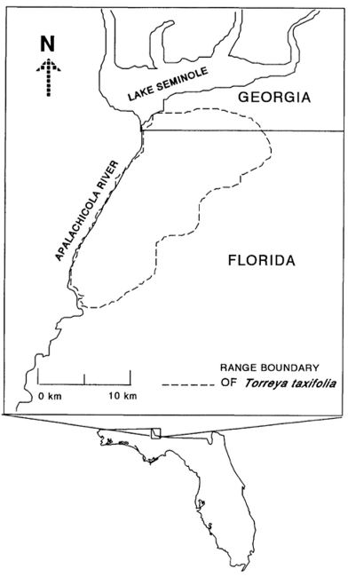 Natural distribution of Torreya taxifolia, 1997